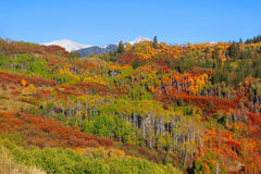 Colorado autumn scene Stock Photo