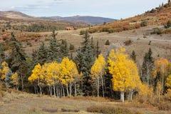 Colorado Autumn Scenery Royalty-vrije Stock Foto's