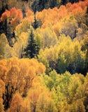 Colorado Autumn Scenic Beauty Stockbild