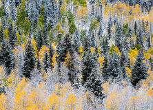 Colorado Autumn Scenic Beauty Fotografia de Stock Royalty Free