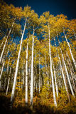 Colorado Autumn Scenic Beauty Imagens de Stock Royalty Free