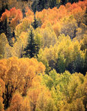 Colorado Autumn Scenic Beauty. Autumn colors create a unique scenic beauty in the Rocky Mountains of Colorado Stock Image