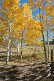 Colorado Autumn Scenic Beauty. Autumn colors create a unique scenic beauty in the Rocky Mountains of Colorado royalty free stock photography