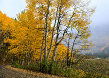 Colorado Autumn Scenic Beauty. Autumn colors create a unique scenic beauty in the Rocky Mountains of Colorado stock images