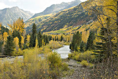 Colorado Autumn Stream. Colorado Autumn with golden aspens, green firs, winding mountain stream and beautiful blue sky royalty free stock image