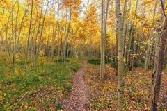 Colorado Autumn Trail stock photography