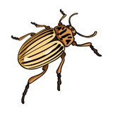 Colorado beetle, a coleopterous insect.Colorado, a harmful insect single icon in cartoon style vector symbol stock. Isometric illustration Royalty Free Stock Images
