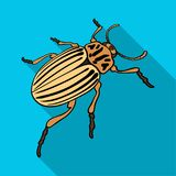 Colorado beetle, a coleopterous insect.Colorado, a harmful insect single icon in flat style vector symbol stock. Isometric illustration Royalty Free Stock Photography