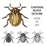Colorado beetle icon in cartoon style isolated on white background. Insects symbol stock vector illustration. Colorado beetle icon in cartoon design isolated on Stock Photos