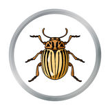 Colorado beetle icon in cartoon style isolated on white background. Insects symbol stock vector illustration. Stock Image