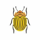 Colorado beetle Royalty Free Stock Photo