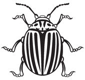 Colorado beetle Royalty Free Stock Photos