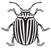 Colorado beetle. Isolated on white background Royalty Free Stock Photos