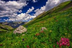 Colorado berg och blommor Arkivbild