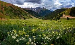 Colorado berg och blommor Arkivfoton