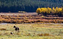 colorado betar den lone bergdalen för hästen Arkivbild