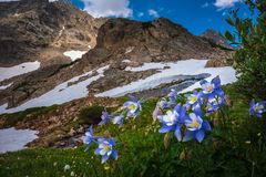 Colorado Landscape Wild Flowers Blue Lake Mt Toll Trail Stock Photos
