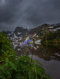 Colorado Blue Columbine white and lavender Rocky Mountain Columb Royalty Free Stock Image