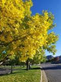 Colorado Blue Fall Season Sky. Yellow & Green Fall Leaves against a Colorado Blue Sky with leaves on the grass and mountain views stock images