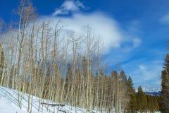 Colorado Blue Skies and Clouds, Breckenridge. Colorado Blue Skies and Clouds, Aspen Trees, Breckenridge, Colorado stock images