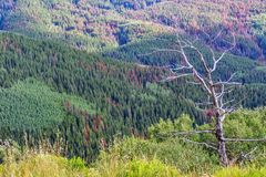 Colorado Canyon Hiking Trail towards the Rocky Mountains Royalty Free Stock Image
