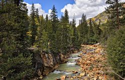 Colorado. At autumn, river, tree stock images