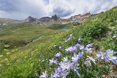 Colorado Columbine Flower on Ice Lake Trail Stock Image