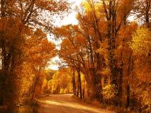 Colorado Cottonwoods Stock Afbeelding