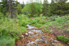 Colorado Creek Royalty Free Stock Image
