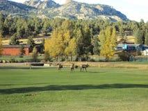 Colorado en la caída Foto de archivo libre de regalías