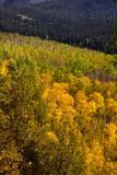 Colorado fall Stock Photography