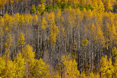 Colorado fall Royalty Free Stock Images