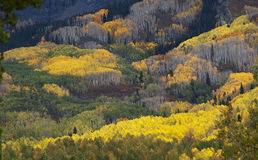 Colorado Fall-12 3751 Royalty Free Stock Photos