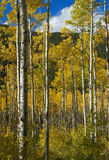 Colorado Fall-12 4063 Stock Images