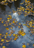 Colorado Fall-12 4279 Royaltyfria Bilder