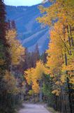 Colorado Fall Colors 439. Beautiful changing Fall colors in Colorado Royalty Free Stock Photography