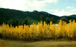 COLORADO FALL COLORS Royalty Free Stock Photography