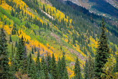 Colorado Fall Foliage Conundrum Hot Springs Trail. Colorado Fall Foliage near Conundrum Hot Springs Trail Stock Images