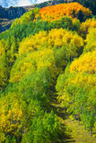 Colorado Fall Foliage Conundrum Hot Springs Trail Stock Photo