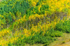 Colorado Fall Foliage Conundrum Hot Springs Trail Stock Image