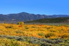 Colorado Fall foliage Royalty Free Stock Images