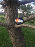 Colorado Flag painted on a rock. Colorado state flag painted on a rock sitting on a tree limb in a park stock image