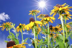 Colorado flowers Royalty Free Stock Images