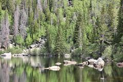 Colorado forest Stock Image