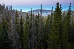 Colorado Forest. White River National Forest, near Silverthorne, Colorado stock photography
