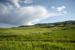 Colorado grässlätt Royaltyfria Bilder