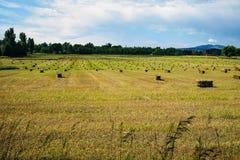 Colorado Grass Hay Royalty Free Stock Image