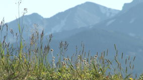 Colorado grass with mountain backdrop. Video of colorado grass with mountain backdrop stock video footage