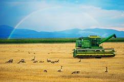 Colorado Harvesting Royalty Free Stock Photos