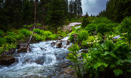 Colorado Landscape water cascade near Isabella lake trail Stock Images